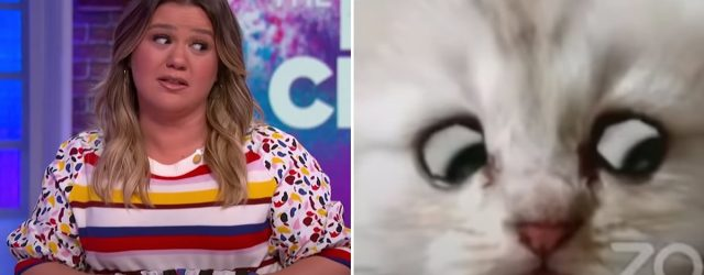 Kelly Clarkson Had the Zoom Cat Filter Lawyer on Her Show, and Sadly, He Was Not a Cat
